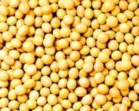 大豆を食べて長生きしましょう!!